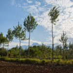 Sigma to plant a forest of trees to recognise employee growth
